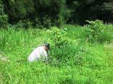 草刈り人たち3
